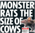 Daily Star rat